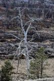 Växter av skog-tundran dog på grund av den luftföroreningplatina-mynt växten Arkivbilder
