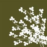 växter av släkten Trifolium Royaltyfria Bilder