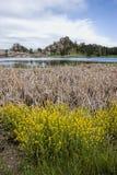 Växter av Sylvan Lake Royaltyfria Bilder