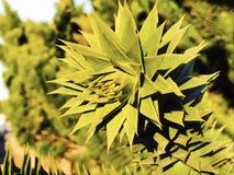 Växter beskådar i dag Royaltyfri Foto
