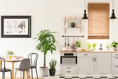 Växter bredvid stolar och tabellen i grå kökinre med pi fotografering för bildbyråer