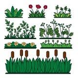Växter för blomma för grönt gräs för grönska och dekorativ grönska stock illustrationer