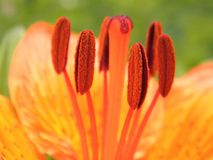 Växter för fotografi för blommamakronatur arkivbild
