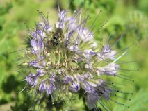 Växter för fotografi för blommamakronatur arkivfoton