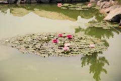 Växter för fotografi för blommamakronatur royaltyfri foto