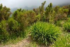 Växter för grön dal arkivbilder
