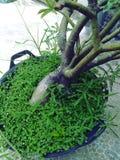 Växter för grönt gräs royaltyfria bilder