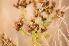 Växter för nedgångtid Fotografering för Bildbyråer