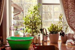Växter för sikt för kökfönsterträdgård Arkivfoton