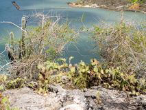 Växter för St Michiel Arkivbild