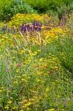 Växter för våren för sommar för vildblommafältträdgården som blommar färgglade utomhus blommar Royaltyfria Foton