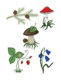 Växter från skogen Royaltyfria Foton