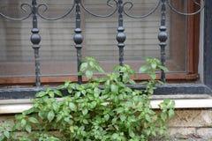 Växter framme av järnstänger royaltyfria bilder