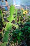 Växter i öknen Royaltyfri Fotografi