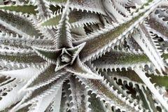 Växter i öknen Arkivfoton