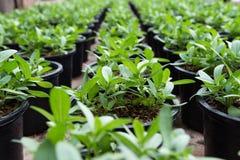 Växter i barnkammare Arkivfoton