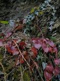 Växter i berg Royaltyfria Foton