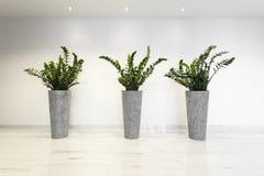 Växter i blomkrukor Fotografering för Bildbyråer