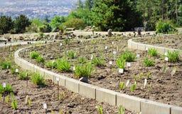 Växter i botanisk trädgård Arkivfoton
