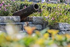 Växter i den rostiga kanonen Royaltyfria Bilder