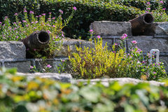 Växter i den rostiga kanonen Arkivbild