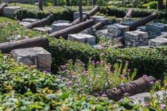 Växter i den rostiga kanonen Arkivfoto