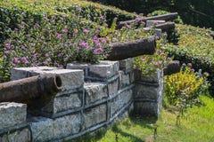 Växter i den rostiga kanonen royaltyfri fotografi