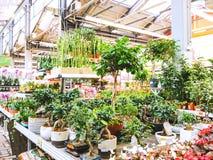 Växter i den trädgårds- avdelningen arkivfoto