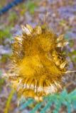 Växter i deras naturliga utrymme som är naturen själv Royaltyfri Fotografi