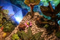 Växter i en behållare Arkivbild