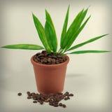 Växter i en kruka från kaffe Royaltyfri Foto