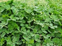 Växter i en ny punkt av sikten royaltyfria bilder