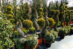 Växter i en växt shoppar arkivbilder