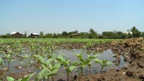 Växter i ett damm av vatten stock video