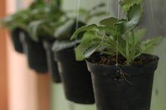 Växter i gården, version 1 royaltyfria bilder