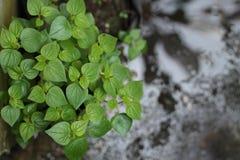 Växter i gården, version 5 royaltyfria foton
