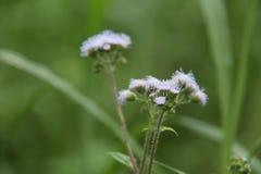 Växter i gården, version 9 royaltyfri bild
