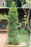 Växter i gården, version 12 Arkivbilder