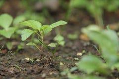 Växter i gården, version 16 Arkivbild