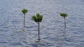 Växter i havet Arkivfoto