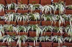 växter i jardiniere Arkivbilder