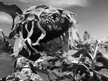 Växter i katastrof Royaltyfri Bild