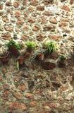 Växter i krukor Arkivfoton