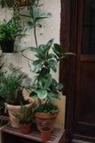 Växter i krukor Fotografering för Bildbyråer
