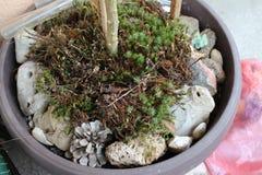 Växter i krukor på min organiska terrass arkivfoto