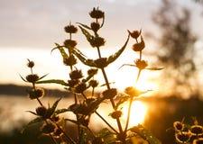 Växter i ljus royaltyfria bilder