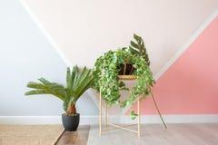 Växter i modern vardagsrum för tappning royaltyfria bilder