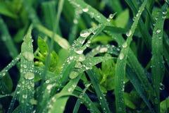 Växter i morgonen i vårträ royaltyfri fotografi