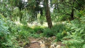 Växter i parken arkivfoton