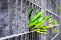Växter i permanent ansträngning för överlevnad Arkivbilder
